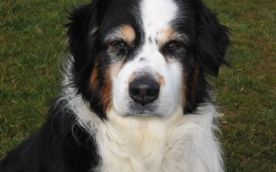 Is your pet becoming a senior citizen?