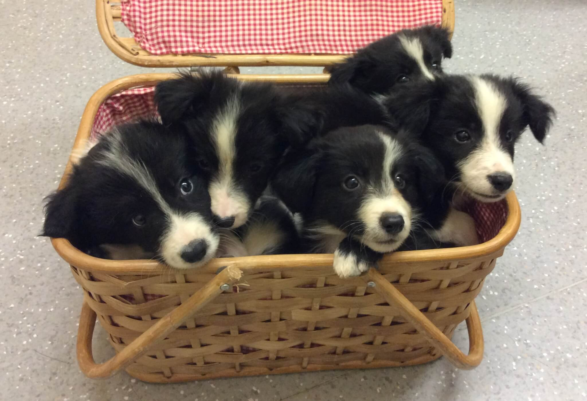 Image of: Southeastern Guide Puppy Preschool Is Class Where Your Puppy Can Begin To Learn To Socialise And Interact With Humans And Other Dogs It Is Vital Part In Young Dogs Youtube Central Coast Puppy Preschool Dog Training At Doyalson