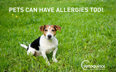 PETS CAN HAVE ALLERGIES, TOO!